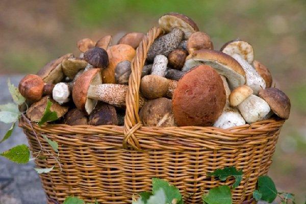 Самые хорошие грибы