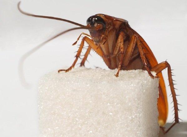 Древние животные - живущие в наше время - Тараканы