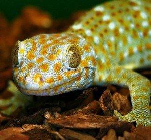 Класс рептилии - мифы и реальность