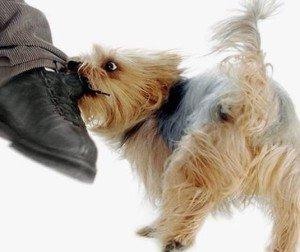 Агрессивная собака - как себя вести с ней