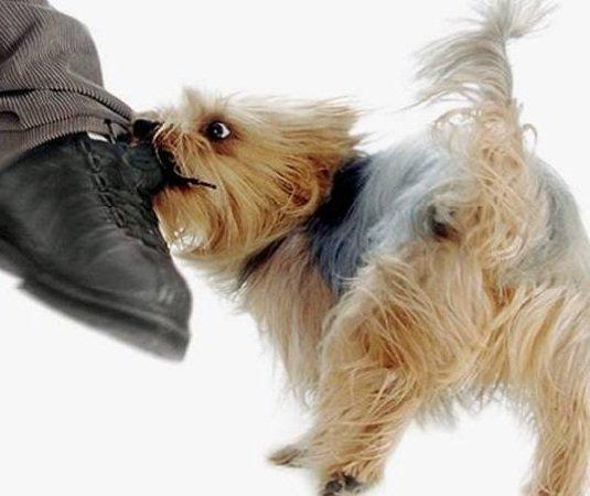 Агрессивная собака — как себя вести с ней?