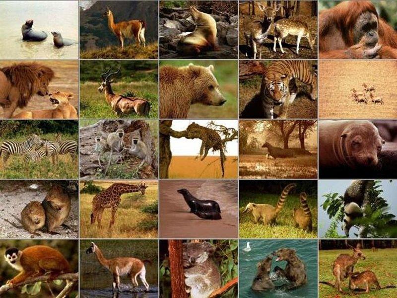 Размножение животных — реферат