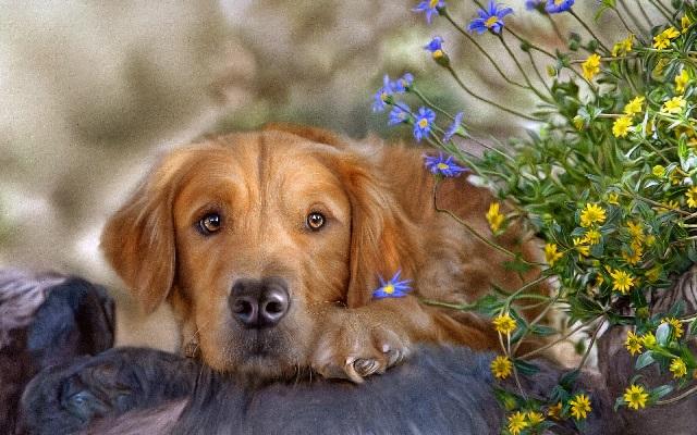 Симптомы болезни собак.