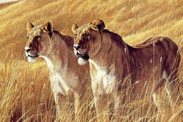 Самые трудолюбивые животные в мире - львицы