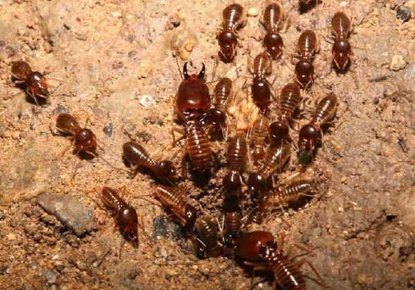 Самые трудолюбивые животные в мире - термиты