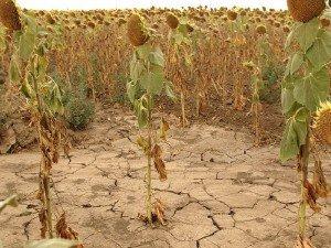 Экология сельского хозяйства России