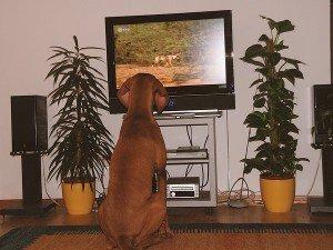 Как видят собаки наш мир - зрение собак