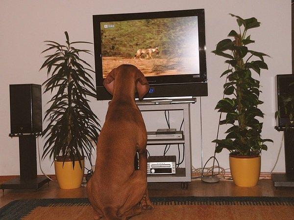 Как видят собаки наш мир и про зрение собак