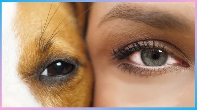 Как видят собаки наш мир? Интересные факты про зрение собак.