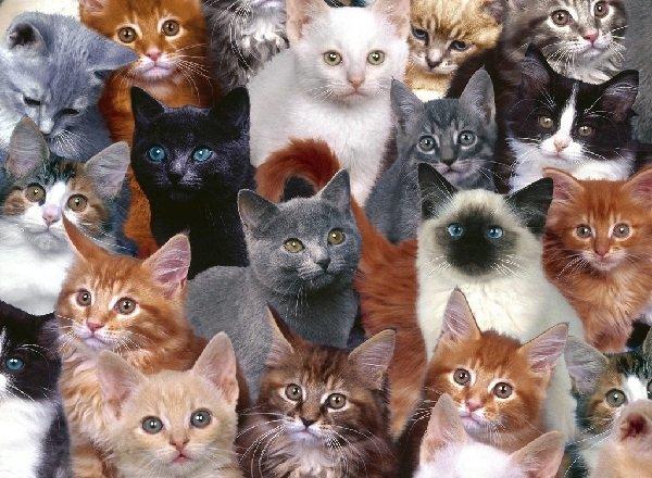 Готовый корм для кошек – это опасно?