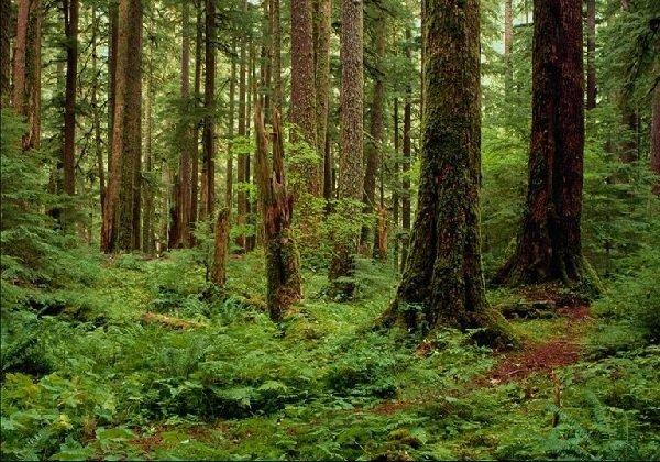 Лес в жизни человека и правила поведения в лесу