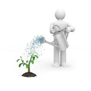 Рос и развитие растений