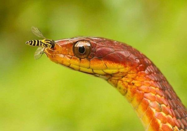 Яд змеи — какой бывает яд у разных змей