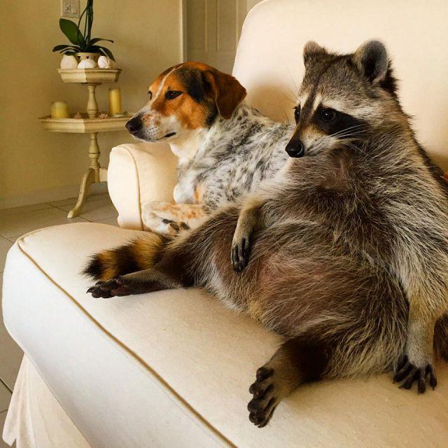 Какое животное завести дома?
