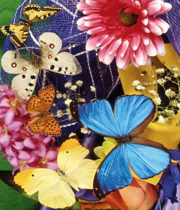 Бабочки — как и сколько живут бабочки