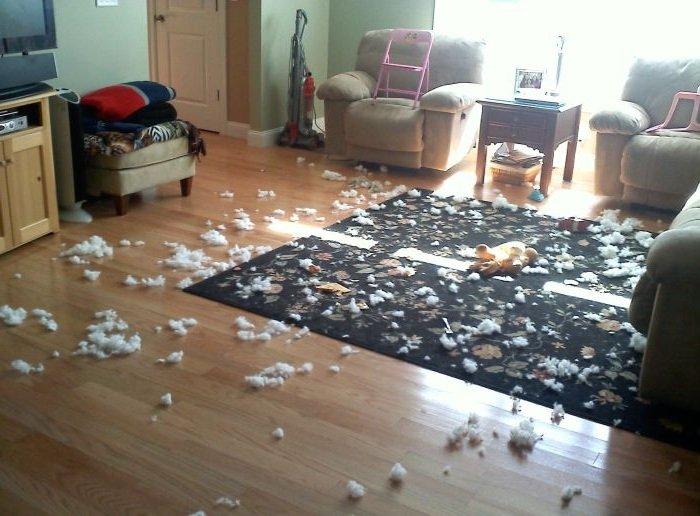 Как отучить собаку от плохих привычек
