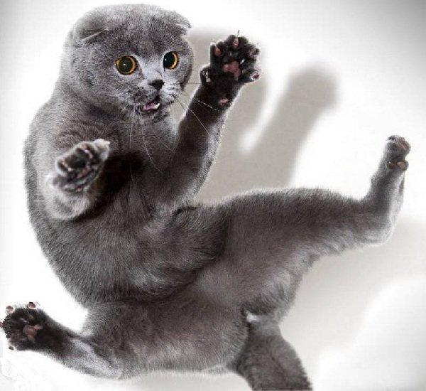 Кастрация и стерилизация котов и кошек