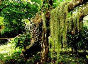 Парк Юрского периода был цветущим садом