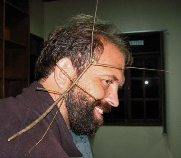 Самое длинное насекомое в мире — палочник