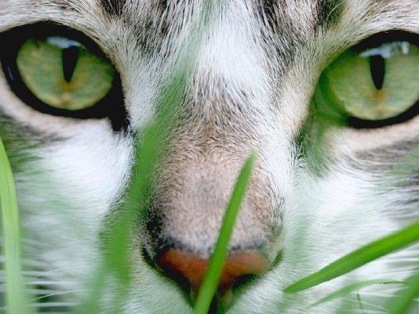 Вирусные инфекции кошек — симптомы и лечение
