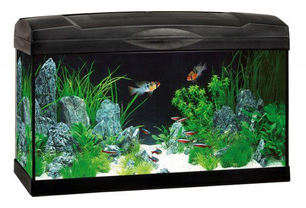 Аквариум – ТОП-7 советов начинающим аквариумистам.