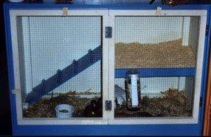 Обустройство клетки для домашнего кролика.