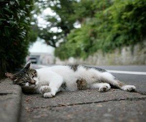 Болезни кошек, живущих на улице