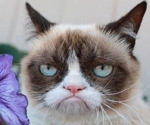 Что говорит кошка своим поведением?