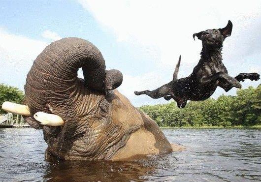 Мифы о животных и их опровержение
