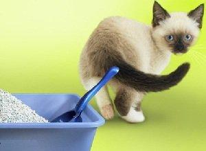 Понос у кошки причины и лечение