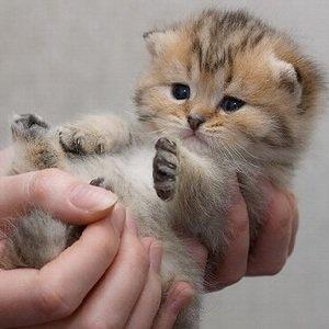 Ручной котенок – отучать или нет?