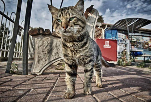 Болезни кошек, живущих на улице.