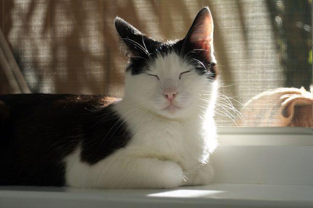 История кошки Мурки
