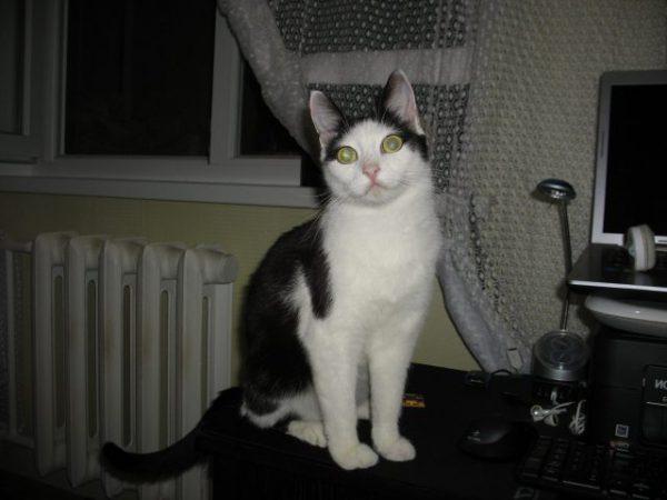 История кошки Мурки.