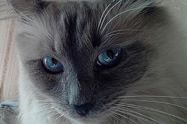 Что говорит кошка своим поведением