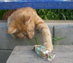 Почему кошкам нельзя есть сладкое