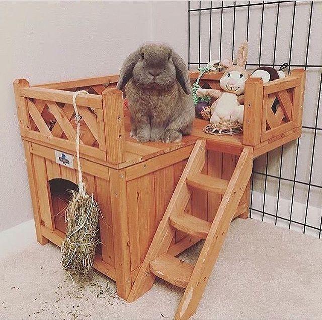 Воспитание и обучение декоративных кроликов