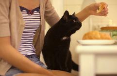 Чем нельзя кормить кошек и какие продукты вредны котам