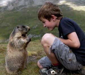 Численность животных на земле регулирует природа