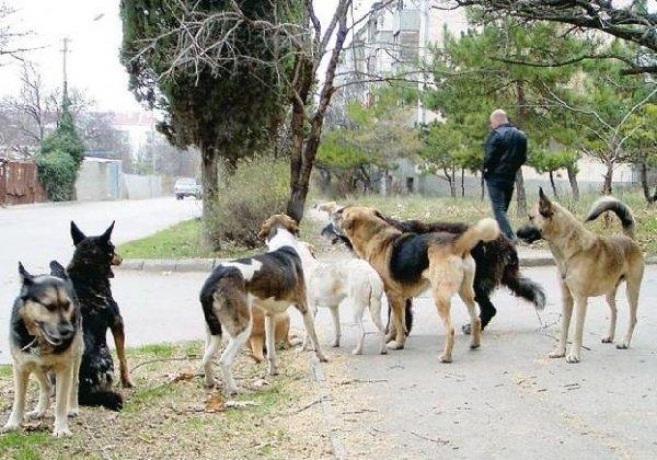 История про ветеринара и его собаках