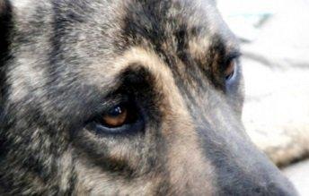 Как умирают животные — кто как уходит из жизни