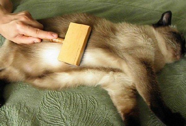 Выпадение шерсти у котов – что делать?