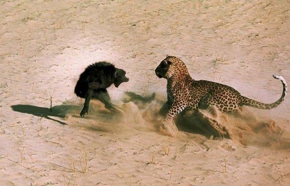 Животные между жизнью и смертью