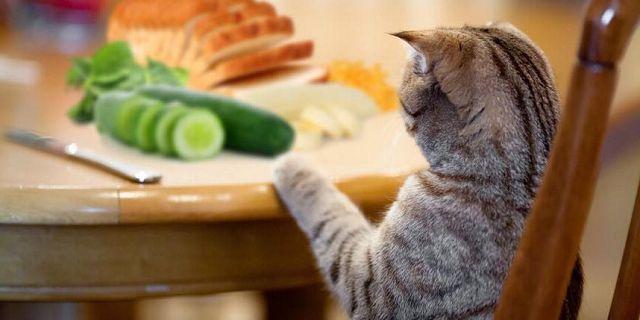 Чем нельзя кормить кошек и какие продукты вредны котам.