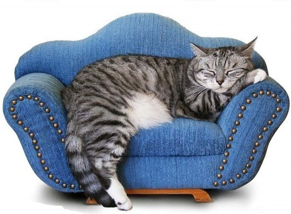 Кошка в доме - опасность и угроза для питомца.