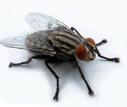 Мухи - зрение мухи и почему ее трудно убить