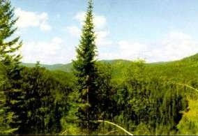 Темнохвойный лес Байкала