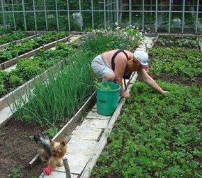 Правила посадки овощей в огороде