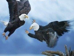 Конкурентность видов в природе