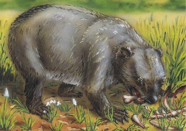 Неизученные африканские чудовища - Медведь Нанди